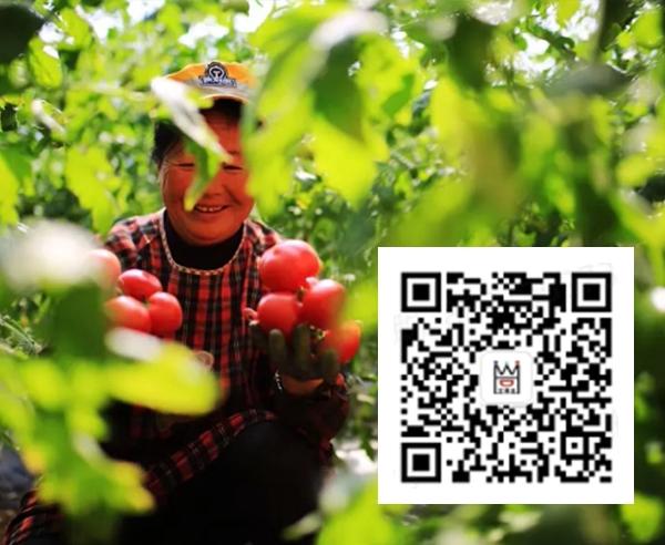 王黑旦农业
